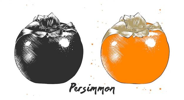 Schizzo disegnato a mano di frutta di cachi Vettore Premium