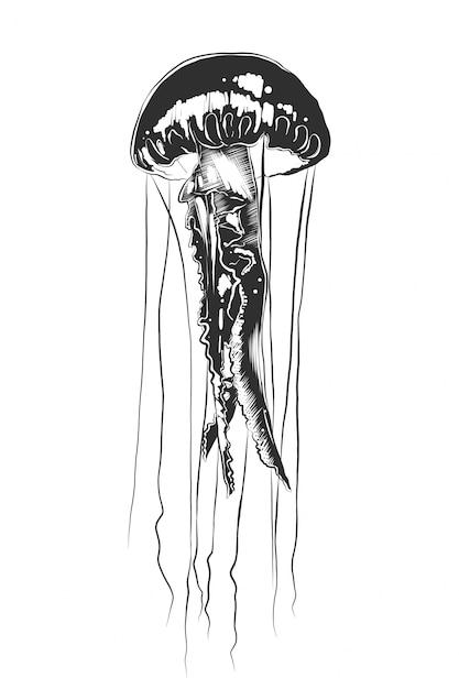 Schizzo disegnato a mano di meduse in bianco e nero Vettore Premium