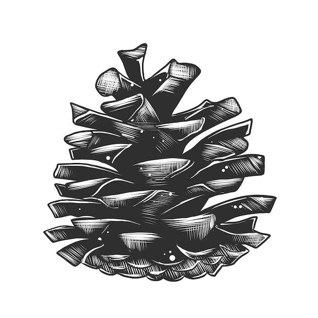 Schizzo disegnato a mano di pigna in bianco e nero Vettore Premium