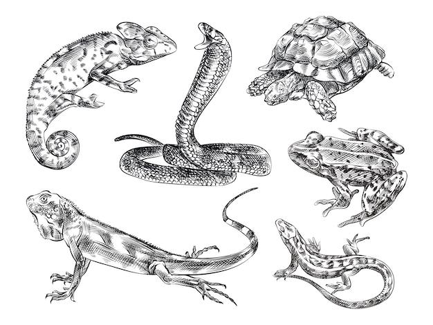 Schizzo disegnato a mano set di rettili. il set include lucertola, camaleonte, serpente, tartaruga, rana, iguana, lucertola, geco. Vettore Premium
