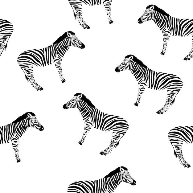 Schizzo modello senza cuciture con zebra selvaggia Vettore Premium