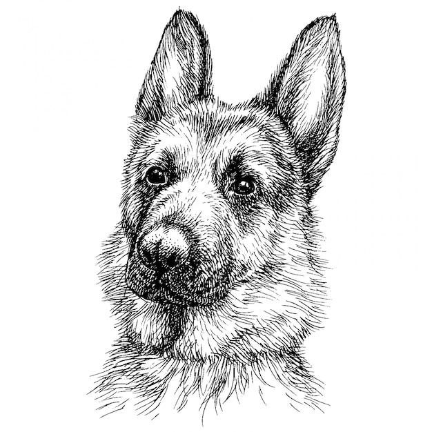 Schizzo ritratto di un bellissimo pastore tedesco. Vettore Premium