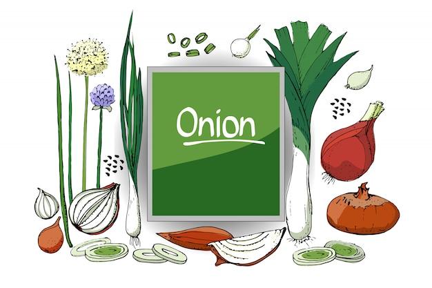 Schizzo vegetale set di cipolla di diversi tipi. cipolle isolate, erba cipollina, allium schoenoprasum e porri. Vettore Premium