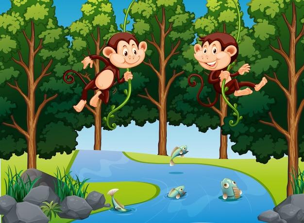 Scimmia che appende sulla vite nella foresta Vettore Premium