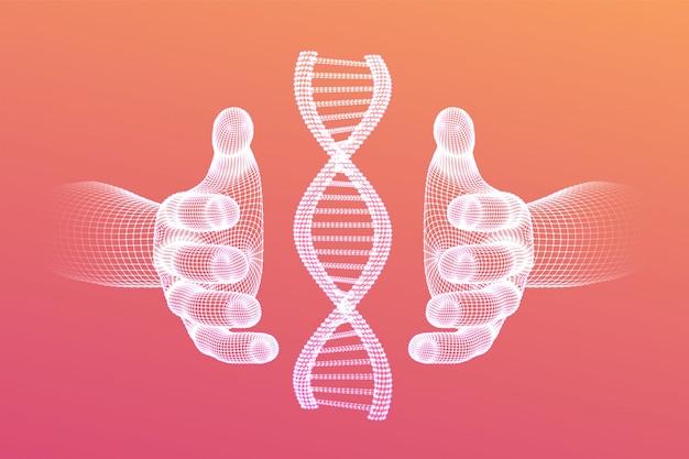 Sequenza di dna nelle mani. maglia metallica della struttura delle molecole di codice del dna di wireframe. Vettore gratuito