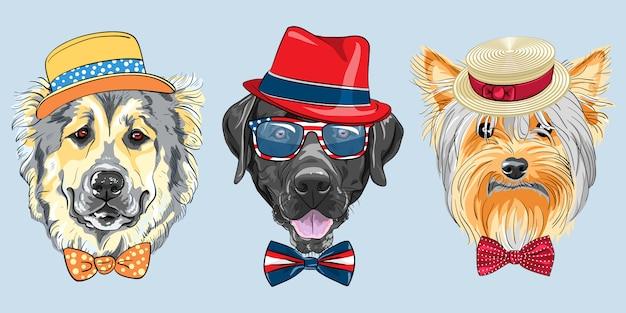 Set 3 cani hipster dei cartoni animati Vettore Premium