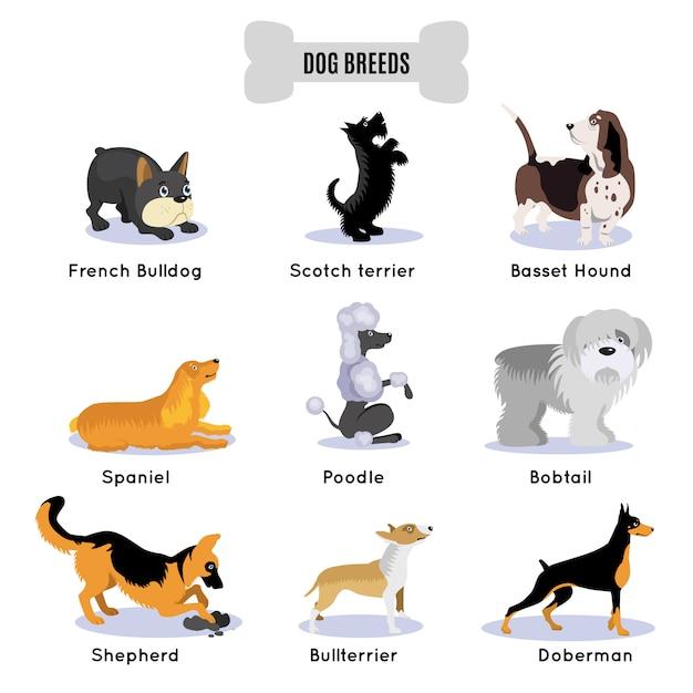 Set colorato di razza di cani Vettore gratuito
