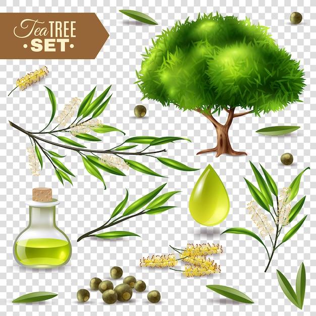 Set dell'albero del tè Vettore gratuito