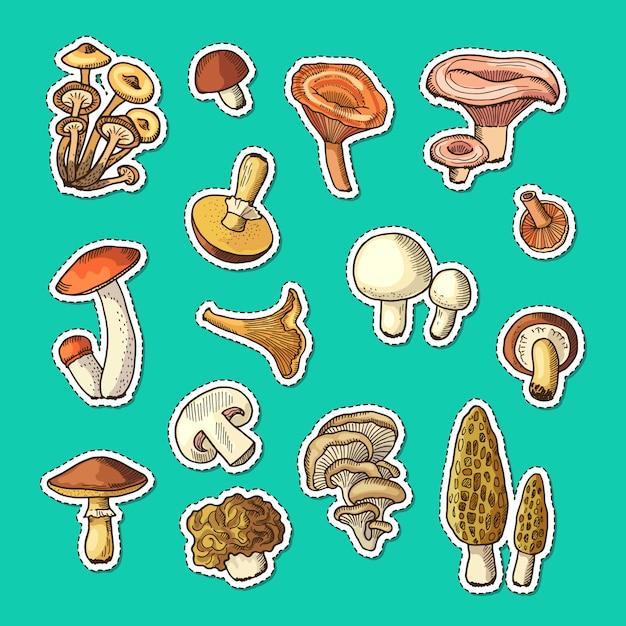 Set di adesivi funghi disegnati a mano Vettore Premium