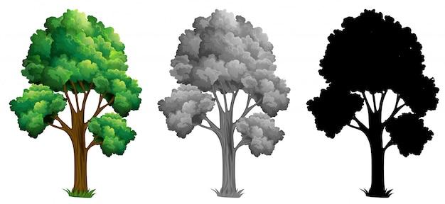 Set di albero isolato Vettore gratuito