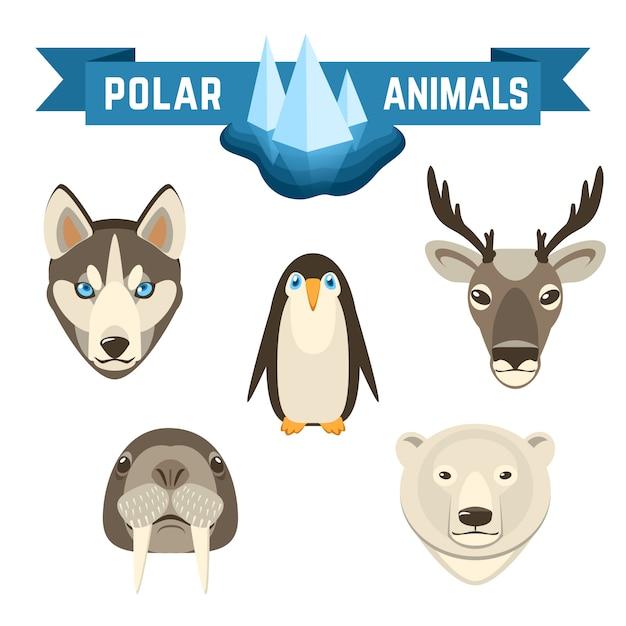 Set di animali polari Vettore gratuito