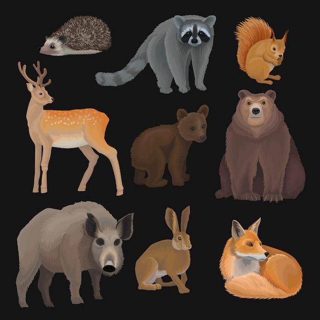 Set di animali selvatici della foresta settentrionale, riccio, procione, scoiattolo, cervo, volpe, cucciolo di orso, cinghiale Vettore Premium