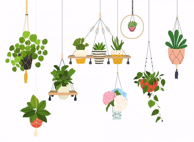 Set di appendini macramè per piante che crescono in vaso. oggetti isolati vaso di fiori, raccolta vaso di fiori da appartamento. Vettore Premium