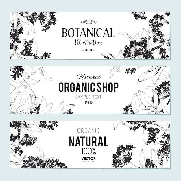 Set di banner di piante ed erbe. elemento per design o carta di invito Vettore gratuito