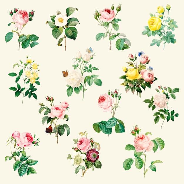 Set di belle rose in fiore Vettore gratuito