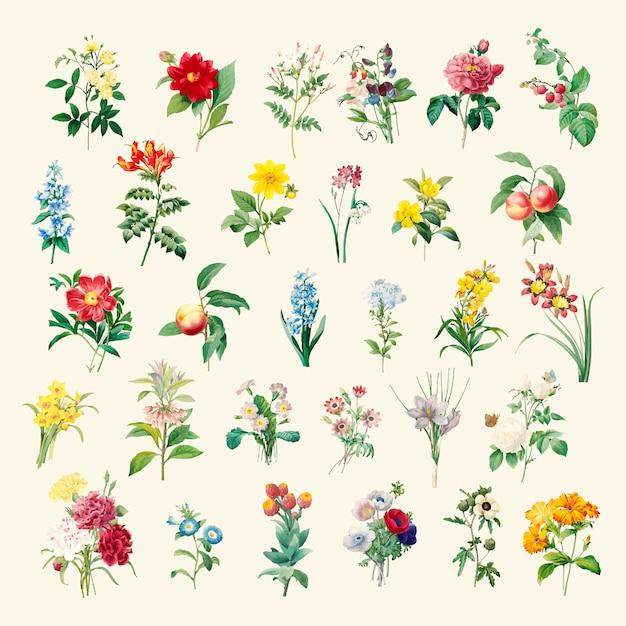 Set di bellissimi fiori selvatici in fiore Vettore gratuito