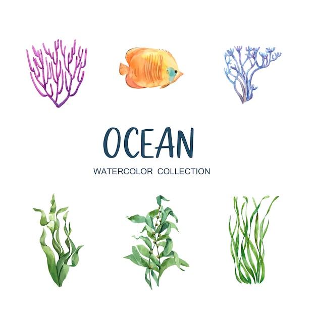 Set di corallo dell'acquerello isolato Vettore gratuito