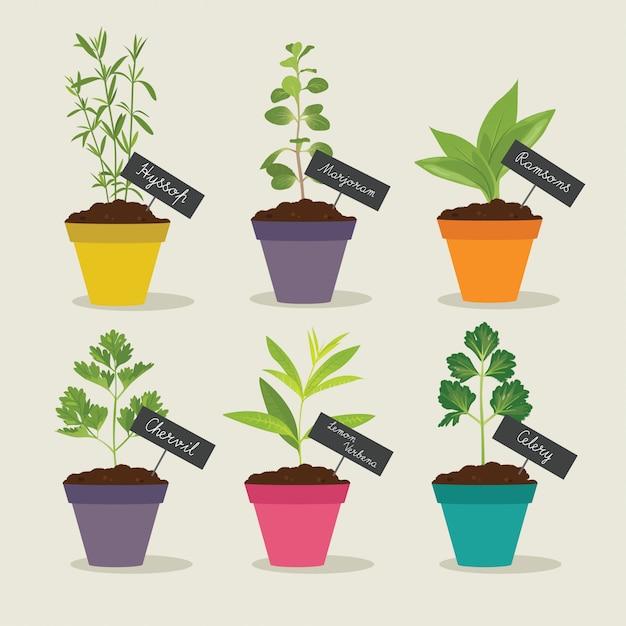 Set di erbe aromatiche con vasi di erbe 3 Vettore Premium
