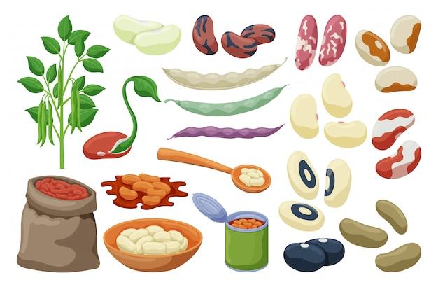 Set di fagioli di cibo Vettore Premium