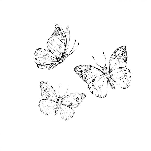 Set di farfalle di schizzo Vettore Premium