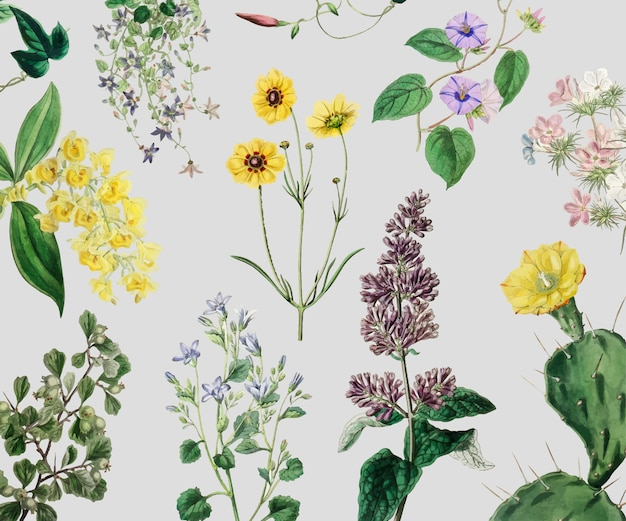 Set di fiori d'epoca Vettore gratuito