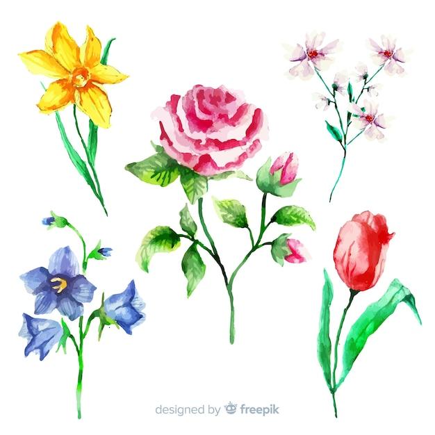 Set di fiori di botanica vintage Vettore gratuito