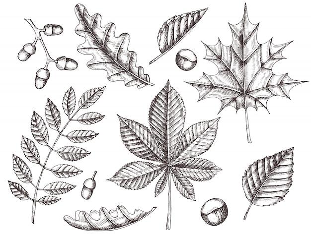 Set di foglie d'autunno. foglie disegnate a mano di acero, betulla, castagno, ghianda, frassino, quercia. schizzo. vintage ▾ Vettore Premium