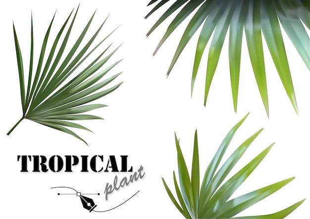 Set di foglie di palme tropicali - illustrazioni di piante tropicali fotorealistiche e dettagliate Vettore Premium