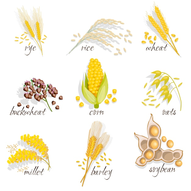 Set di icone di cereali Vettore gratuito