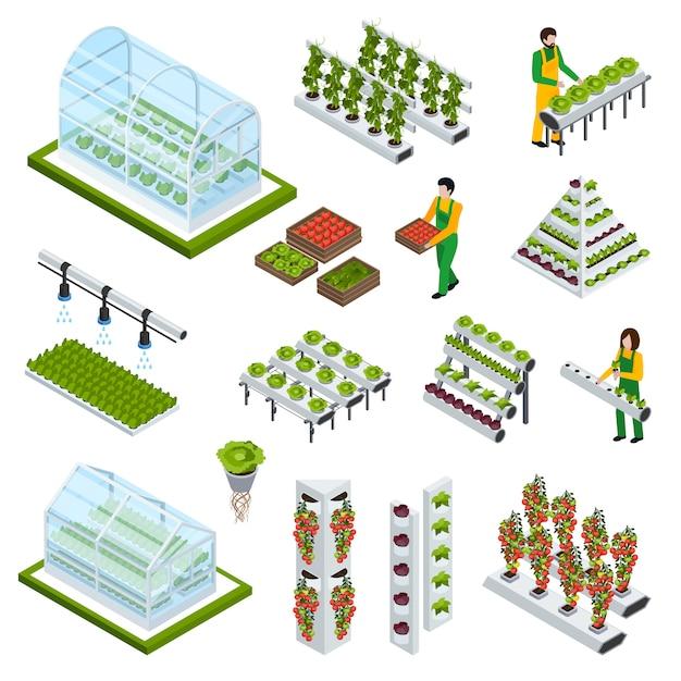 Set di icone di coltura idroponica Vettore gratuito