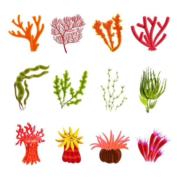 Set di icone di corallo Vettore gratuito