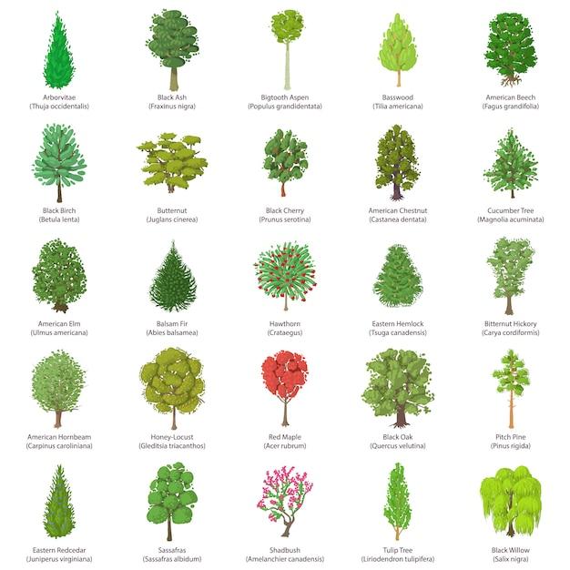 Set di icone di tipi di albero. un'illustrazione isometrica di 25 tipi di albero vector le icone per il web Vettore Premium