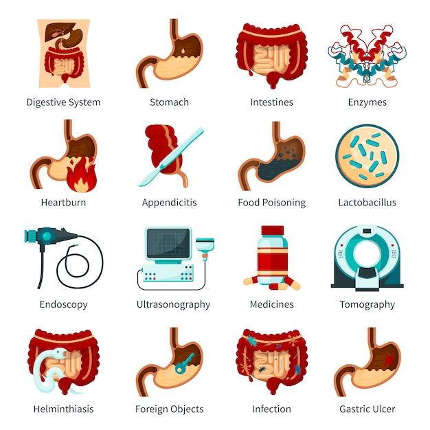 Set di icone piatte del sistema digestivo Vettore gratuito