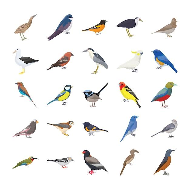 Set di icone vettoriali piatto uccelli Vettore Premium