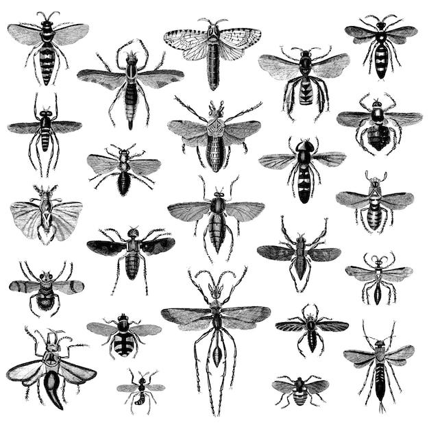 Set di illustrazione di vari insetti Vettore gratuito