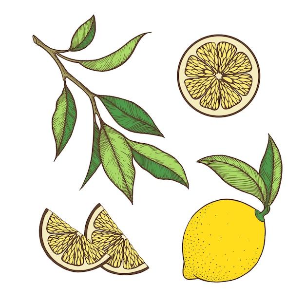 Set di limone Vettore Premium