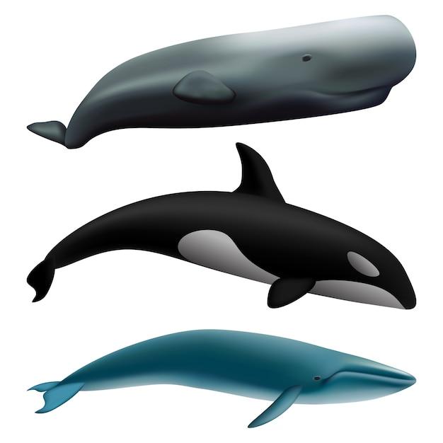 Set di mockup di pesce balena blu racconto Vettore Premium