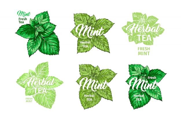 Set di modelli di tè alle erbe con etichetta di menta fresca. Vettore gratuito