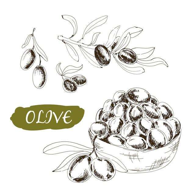 Set di olive in stile incisione Vettore Premium