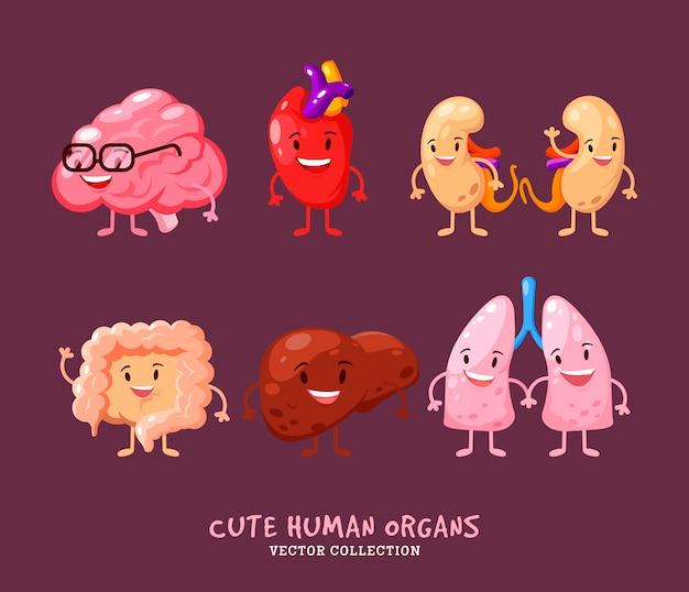 Set di organi interni umani. reni, fegato. cuore, cervello e polmoni. con maniglie, gambe e sorrisi. anatomia divertente stampa. Vettore Premium