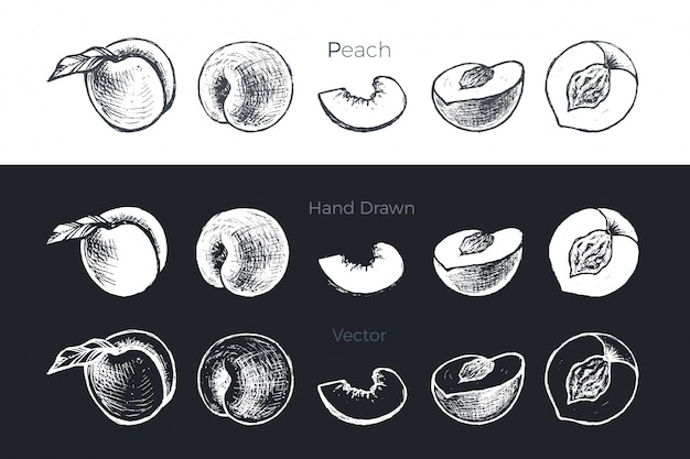 Set di pesche e albicocche disegnati a mano Vettore Premium