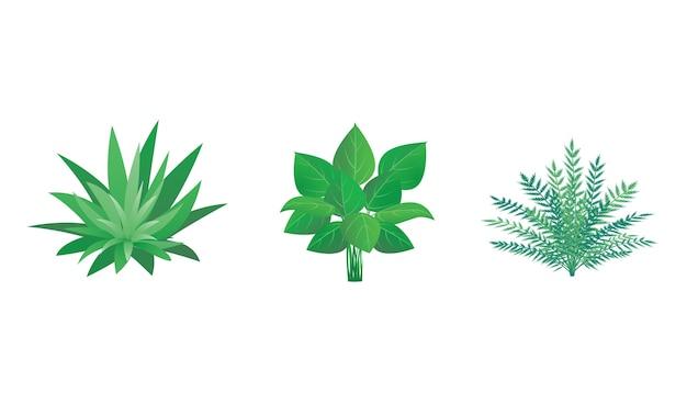 Set di piante da giardino arbusti e cespugli - Piante cespugli da giardino ...