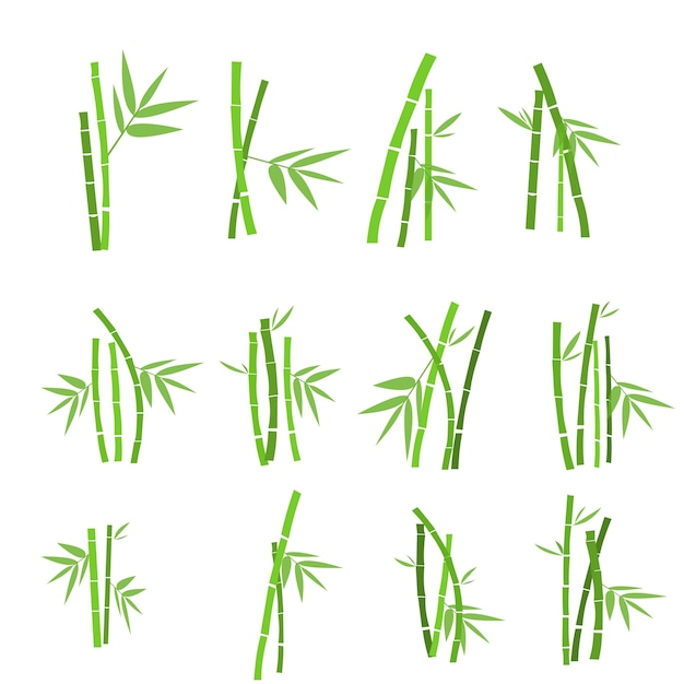 Set di piante di bambù Vettore Premium