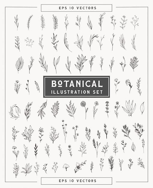 Set di piante e fiori botanici minimal. illustrazioni semplici disegnate a mano in stile arte linea. elementi isolati per la progettazione grafica, clipart trasparenti per la tua creatività. Vettore Premium