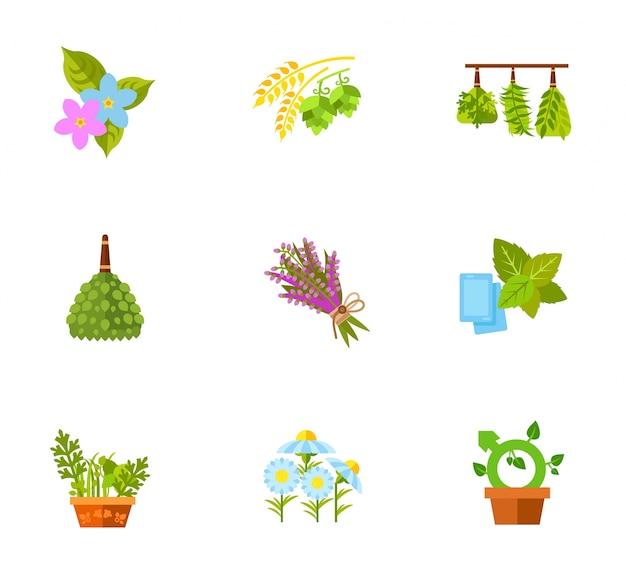 Set di piante e fiori Vettore gratuito