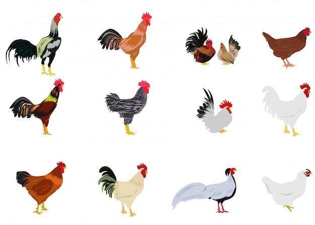 Set di polli su sfondo bianco Vettore Premium