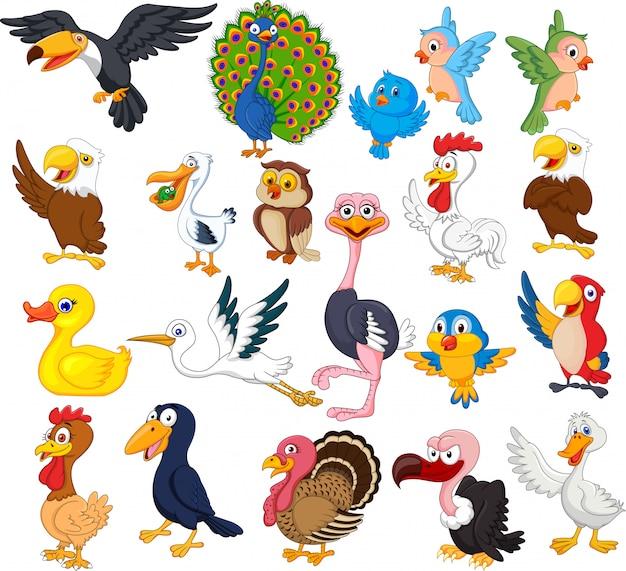Set di raccolta di uccelli dei cartoni animati Vettore Premium