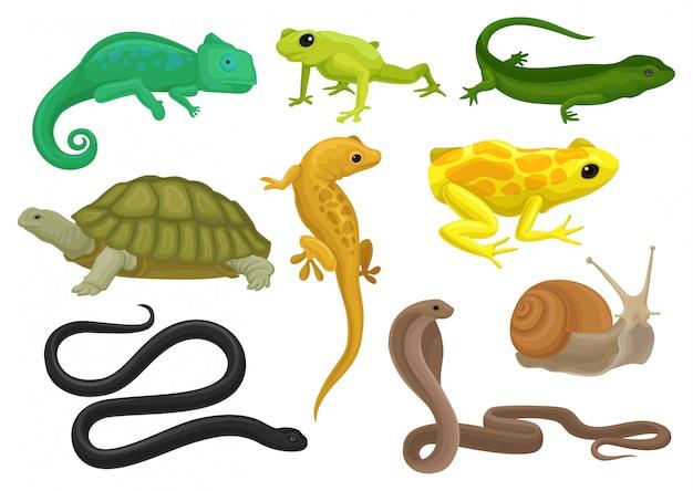 Set di rettili e anfibi, camaleonte, rana, tartaruga, lucertola, geco, tritone illustrazione su sfondo bianco Vettore Premium