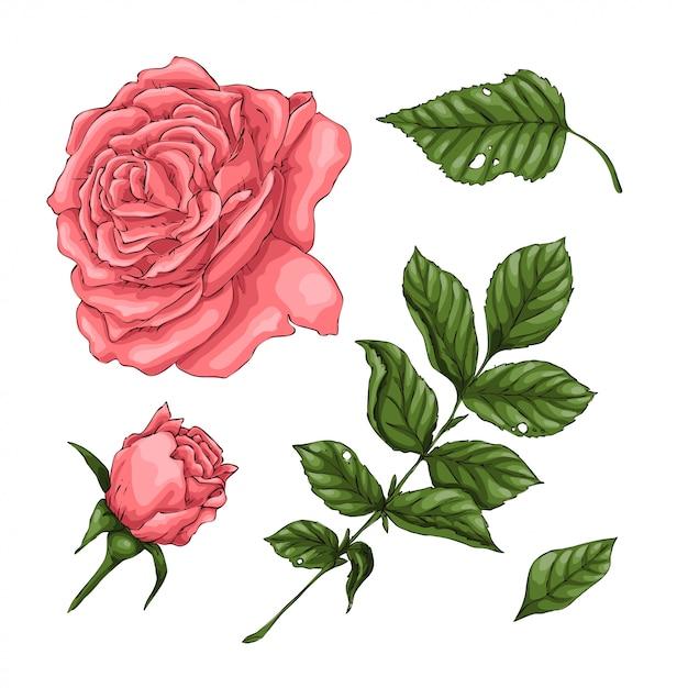 Set di rose di corallo Vettore Premium