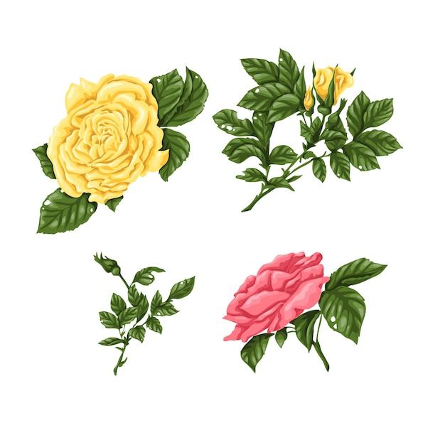 Set Di Rose Rose Gialle Mazzi Di Fiori Fiori E Boccioli